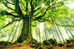 On the Beauty of theTree